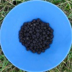 El amor por la tecnología: larga vida a las Blackberries