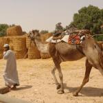 Guía para sobrevivir a la oficina de un cierto sabio del desierto