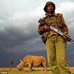 No pensar críticamente, un hábito peligroso para las personas… ¡y para los rinocerontes!